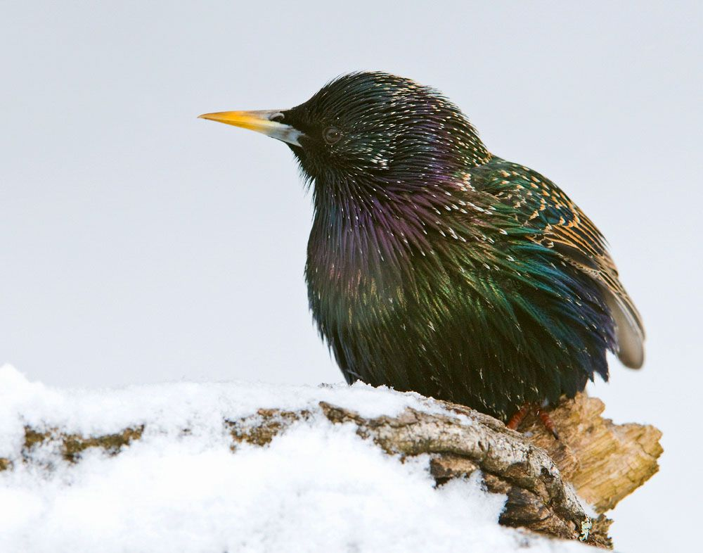 Get to Know These 15 Common Birds | Common birds, Great ...