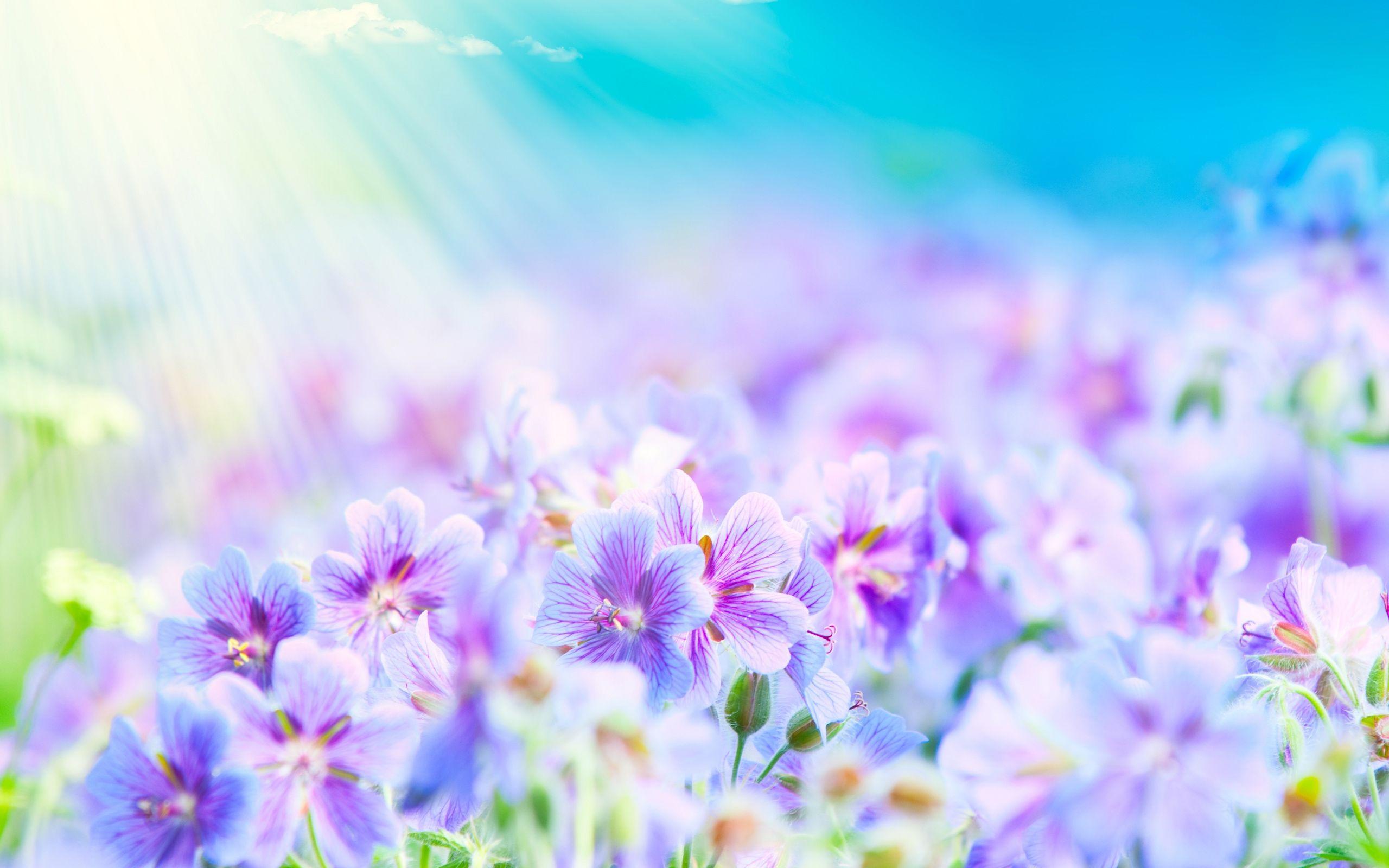 summer flowers Summer Flowers Wallpaper Delightful Purple