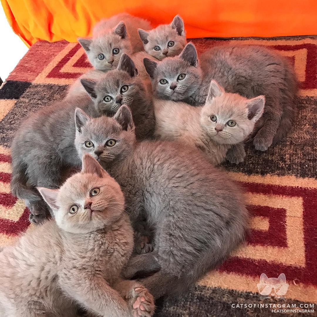 From With Three Cats Are You Eating An Icecream Without Us Catsofinstagram Cute Cats Cute Cats And Kittens Kittens Cutest