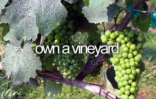 Ter um vinhedo.