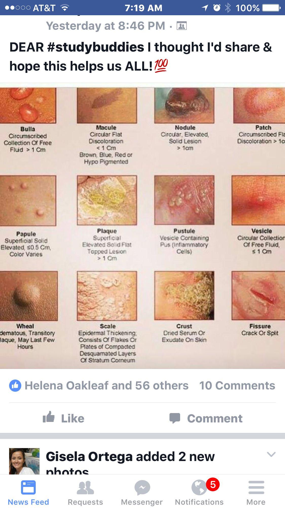 Dermatology identification nursing pinterest medical school nursing classes 1betcityfo Choice Image
