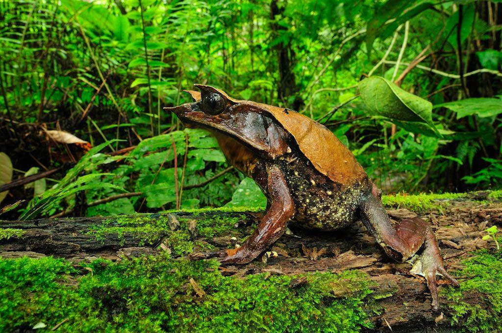 14285jpg (1024×681) Animals (Amphibians) Pinterest - bodenbelag f r k che