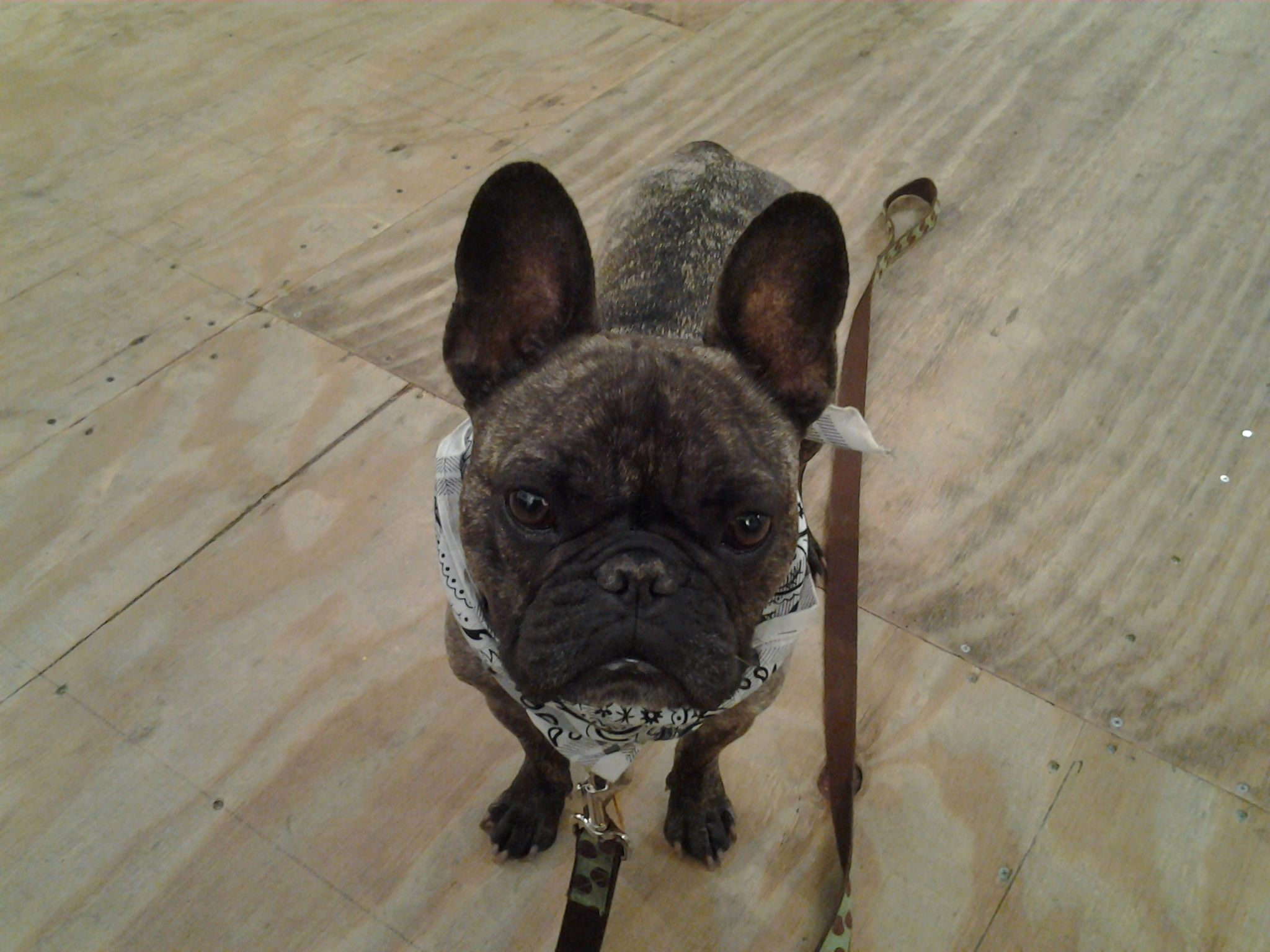 Henry is the star of the Loft Studio. he comes on Wednesday, October- April. He has regular fans who drop in to play with him.