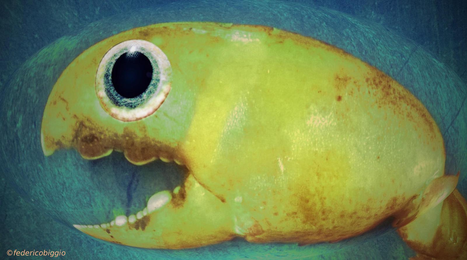 AlternativeVisions: Fisheye