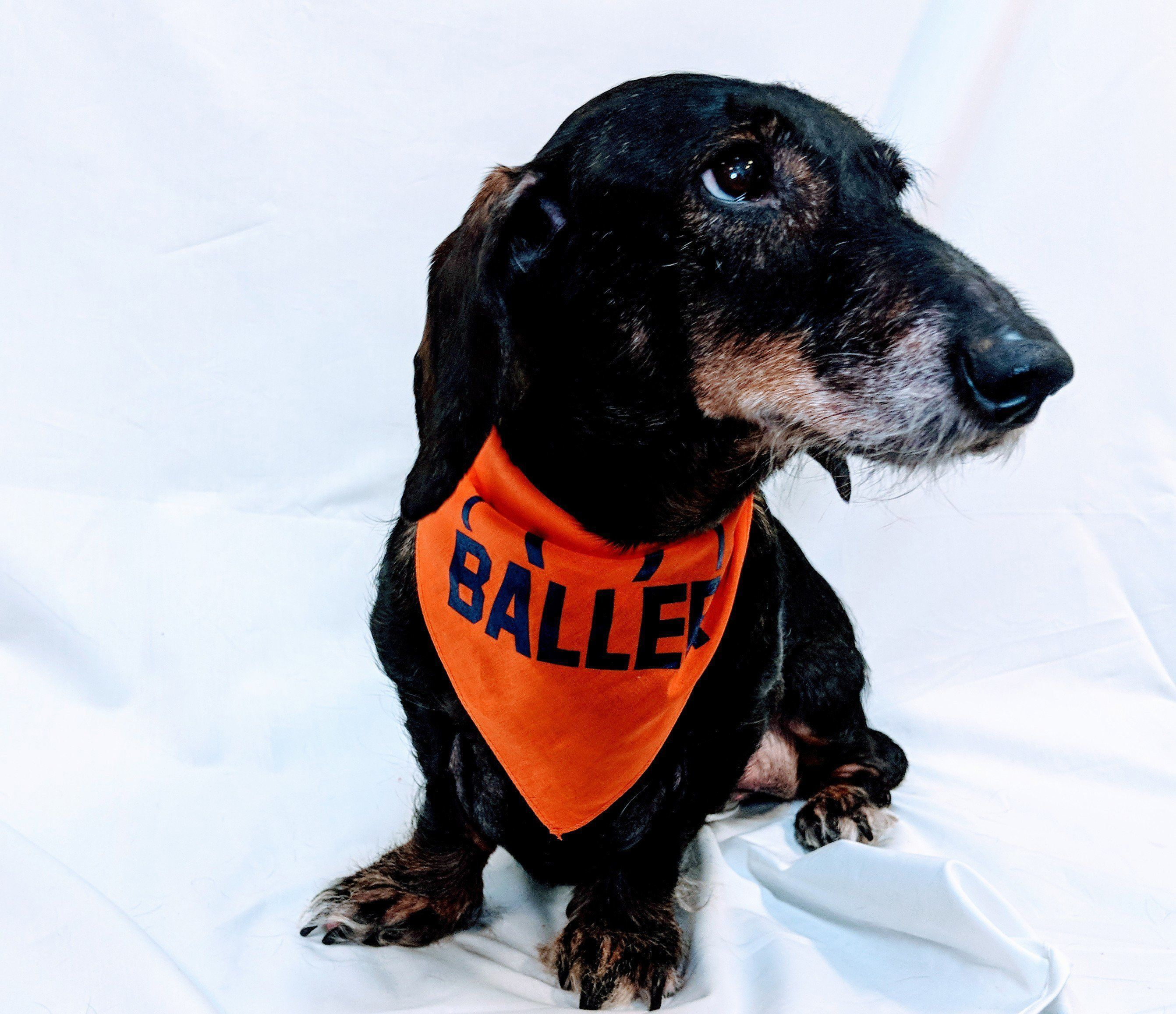 6debeba58d Have you got a BALLER living in your house  These high quality dog bandanas  are