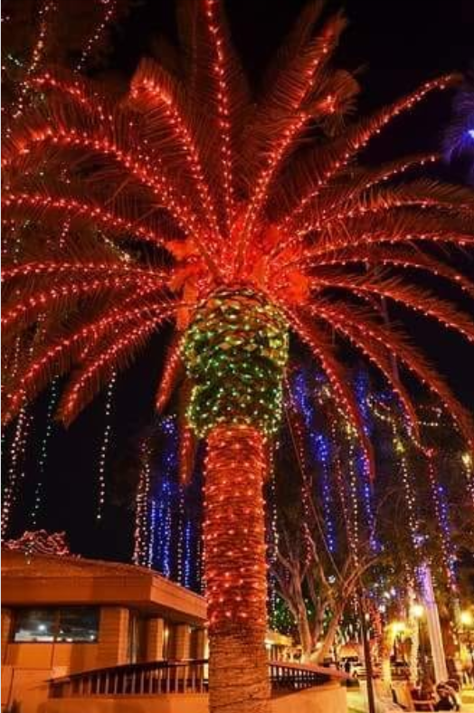 Palm Tree Decorated for Christmas Glendale Arizona, Arizona Usa, Glendale  Glitters, Christmas Light - Palm Tree Decorated For Christmas Christmas Trees(Outside) In 2018