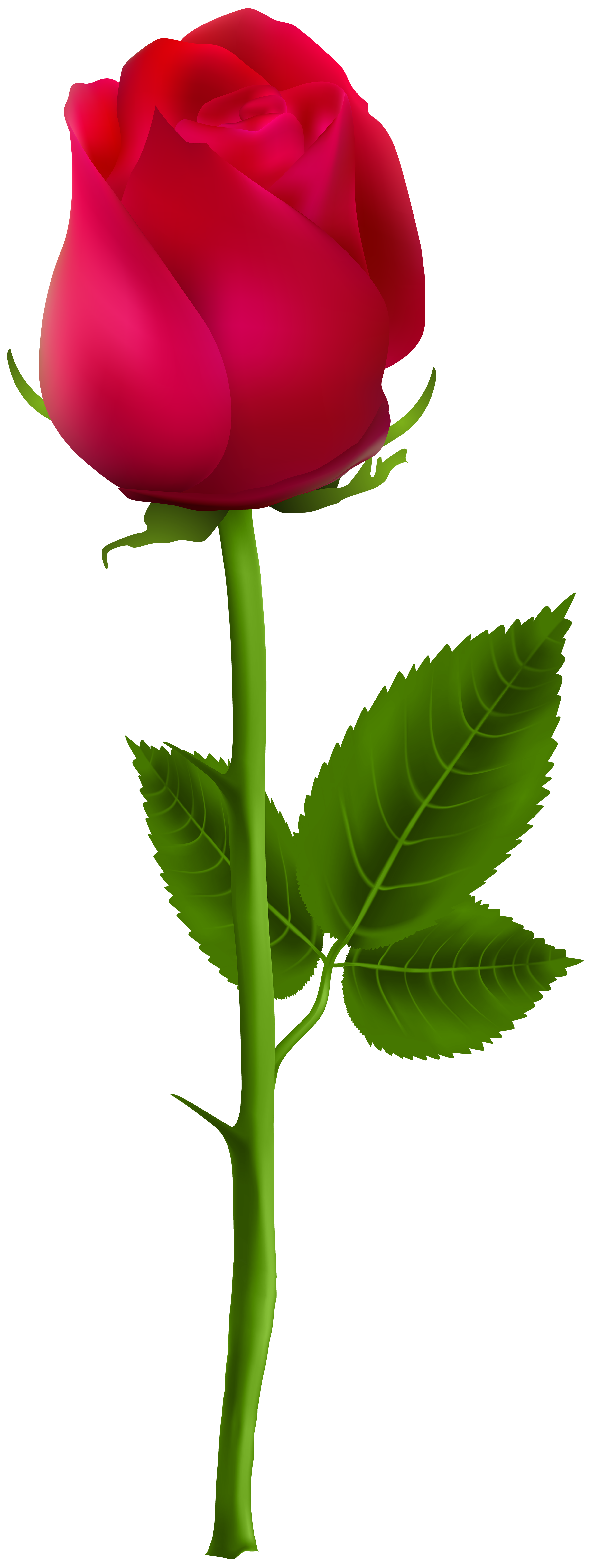 Red Rose Png Clip Art Image Gallery Yopriceville High Quality Images And Transparent Png Free Clipart In 2020 Red Rose Png Red Roses Wallpaper Rose Flower Png