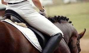 Groupon - One, Three, or Five 60-Minute Private Horseback-Riding Lessons at Taylor River Farm (Up to 73% Off) in Hampton Falls. Groupon deal price: $24