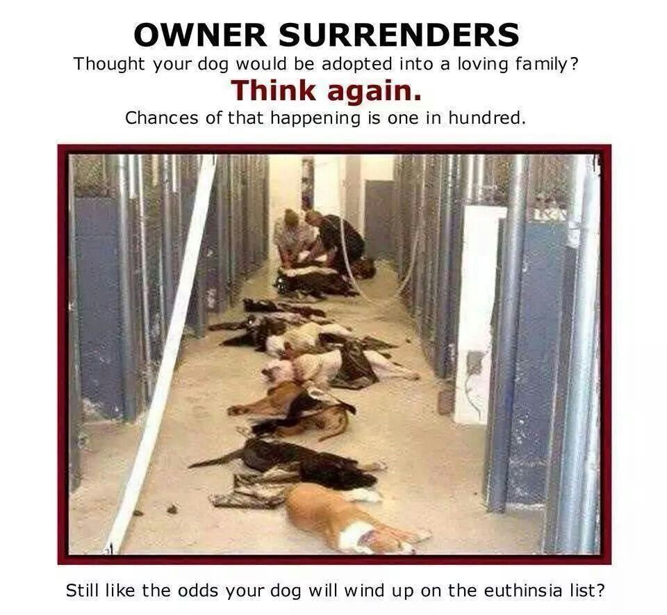 Owner Surrenders Most Think They Re Doing A Good Thing In Reality The Odds Of Your Dumped Off Dog Getting Adopted Animals Animal Activism Movement Of Animals