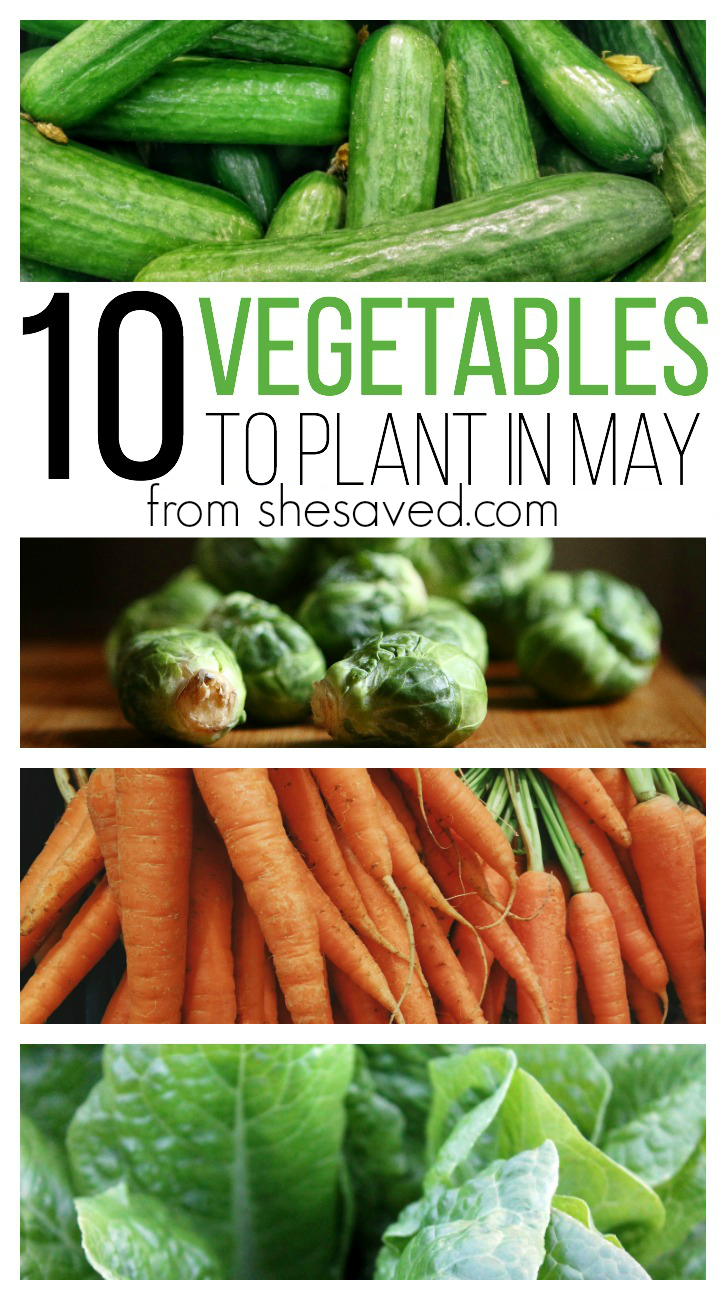 12 Vegetables To Plant In August Zone 9: 10 Vegetables To Plant In May