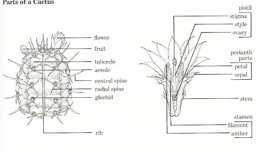 Cactus spines are easy enough to avoid, but watch out for