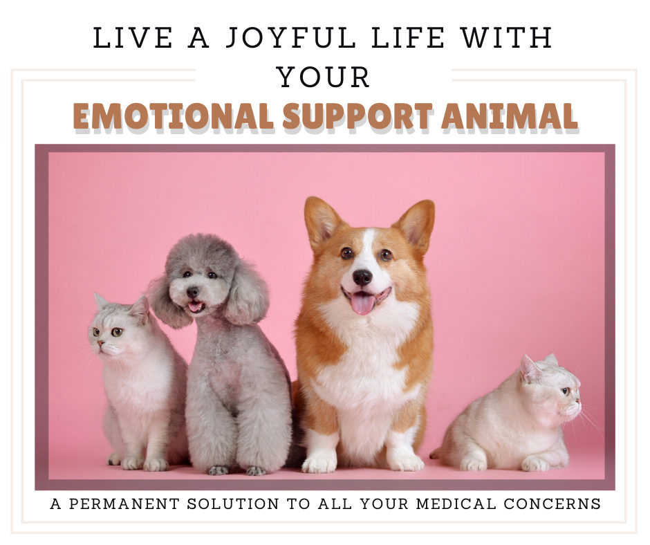 Take your Emotional Support Animal to Rental Apartment