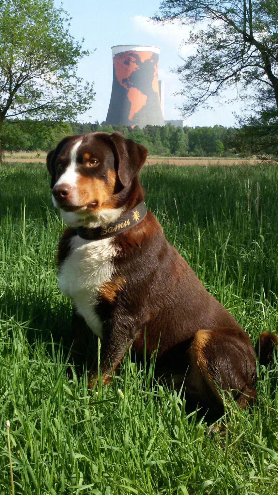 Pin Von Amazing Doggo Auf Appenzeller Sennenhunde World