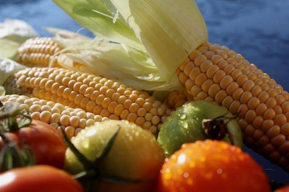 food dehydrator jerky_2337_20200430203404_59 how to food