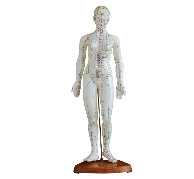 Pin By Medical Models Online On Acupuncture Models Pinterest