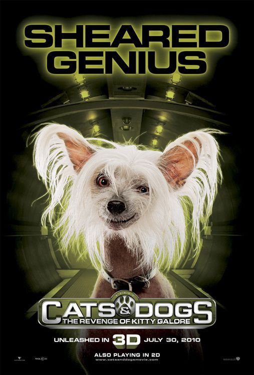 Cats And Dogs The Revenge Of Kitty Galore Movie Stop Your Cats From Spraying In Your Home Perro Gato Perros Gatos