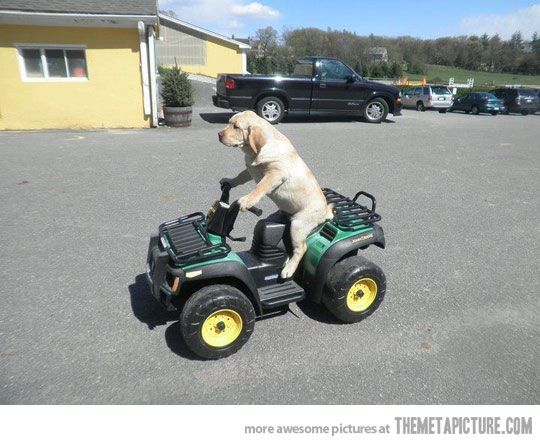 Funny Dog Driving Toy Car Funny Animal Pictures Funny Dog