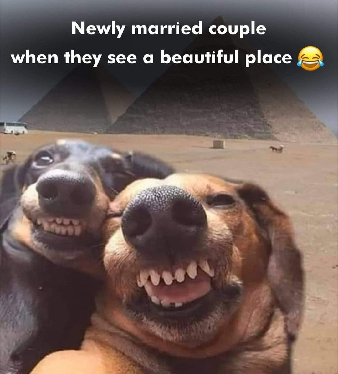Pin By Fathi Nuuh On Funny Newly Married Couple Married Couple Newly Married