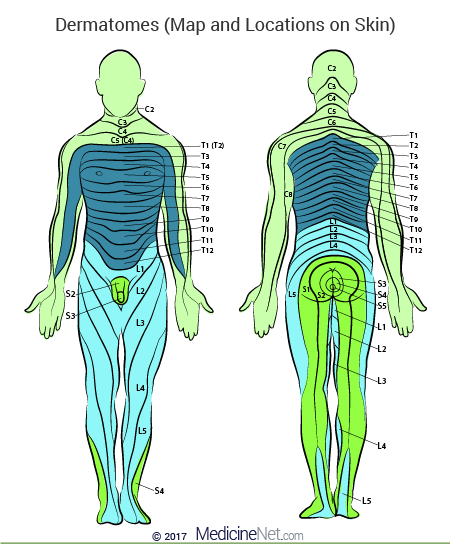 Skin Dermatome Map Of The Human Body Health And Wellness