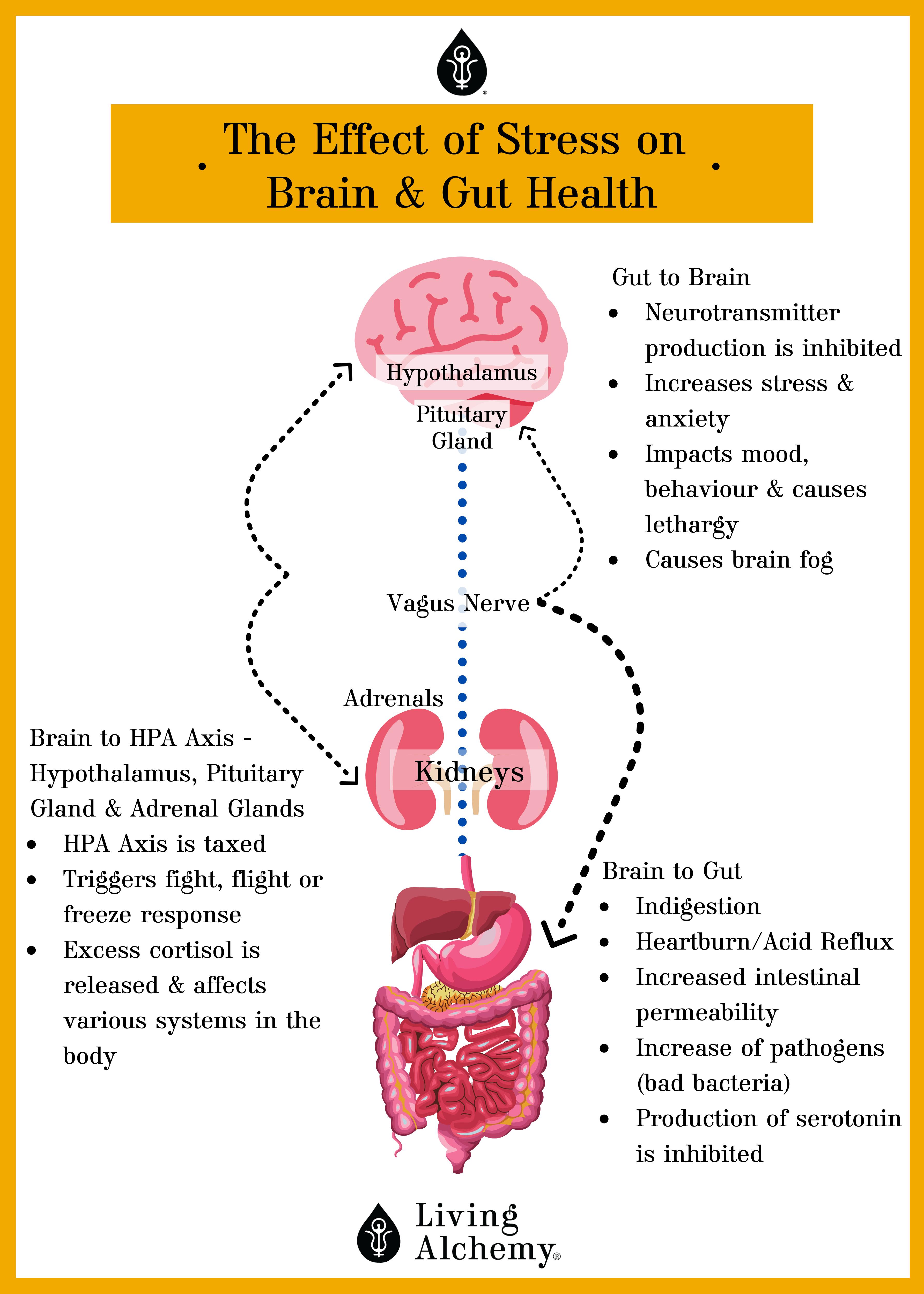 Gut brain health