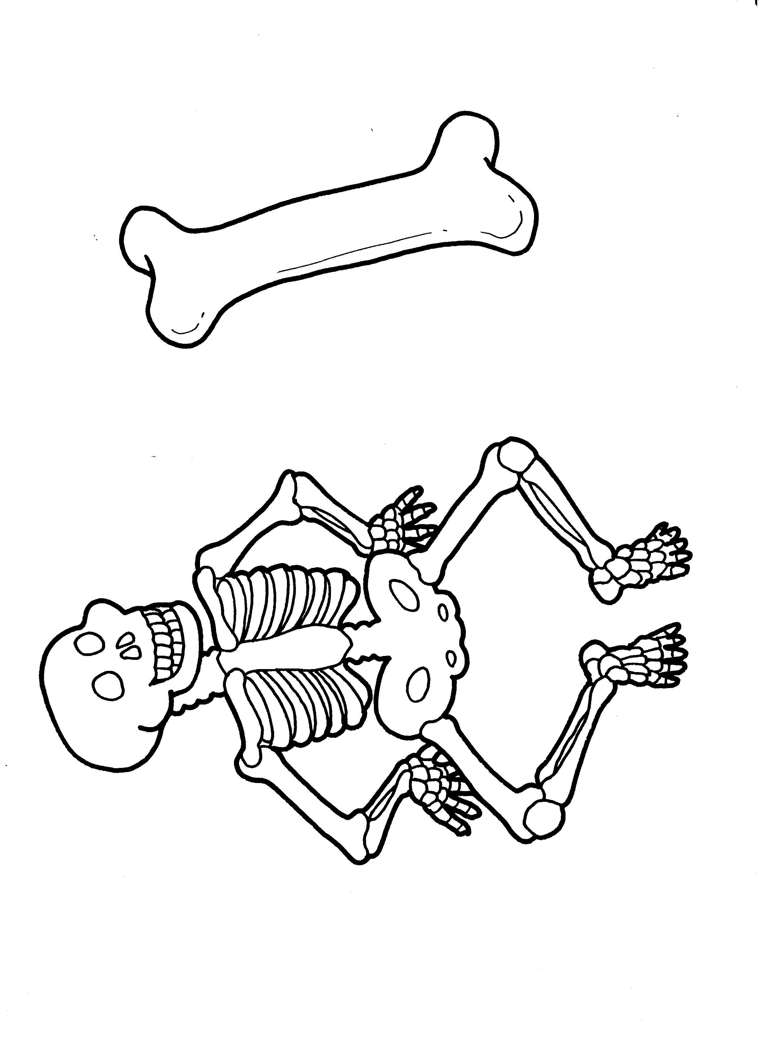 Body Awareness Skeleton Bones