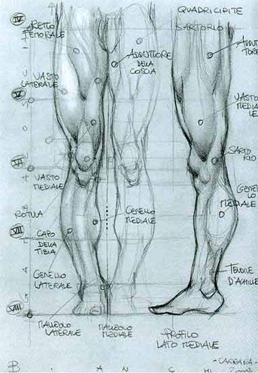 SIMONE BIANCHI - ANATOMICAL DRAWINGS   Legs   Pinterest   Simone ...