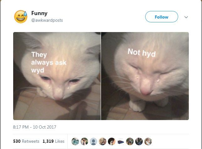 White Cat Screaming Meme Gif