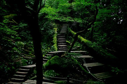 forest stairs  sometimes both ways lead to the same place
