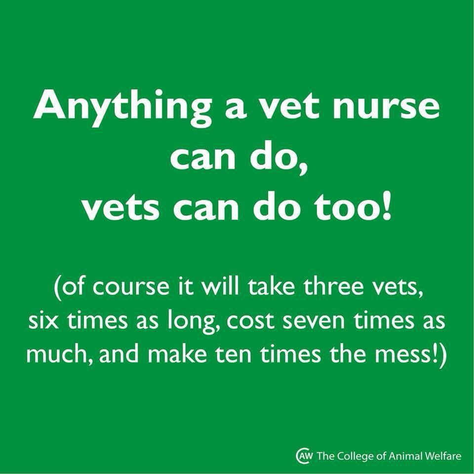 Pin By Brooke Griffith On Veterinary Stuff Vet Tech Quotes Vet Tech Humor Vet Medicine