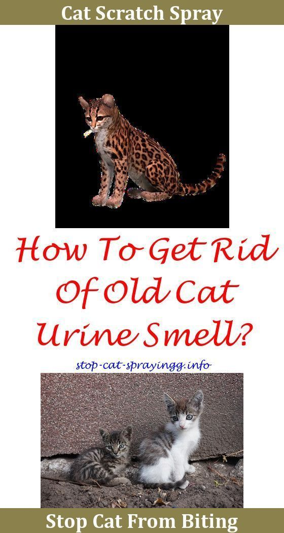 Cat Training How To Stop Cat Urine Smell,anti Cat Spray For Furniture Clean  Cat Pee From Carpet.Cat Peeing On Furniture Best Product To Elu2026 | Cat Idead  ...