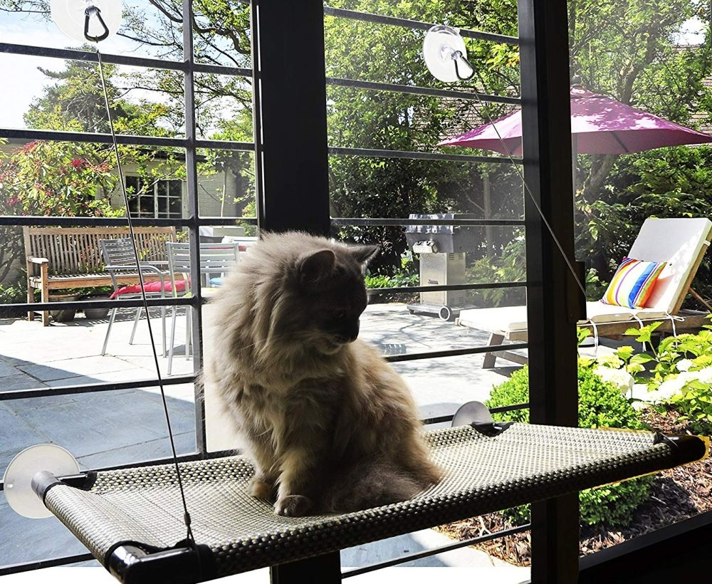 Cat window perch cat window perch cat window window perch