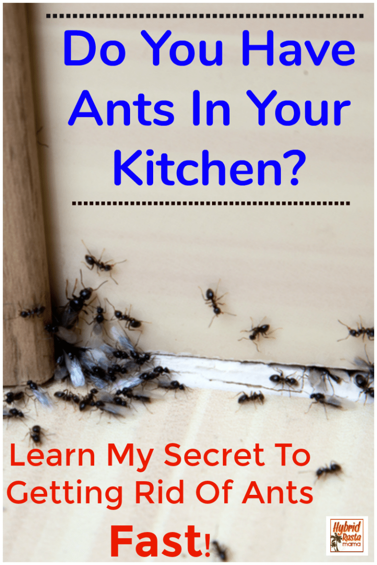 How To Get Rid Of Ants 9 Natural Ways To Prevent Ants Get Rid