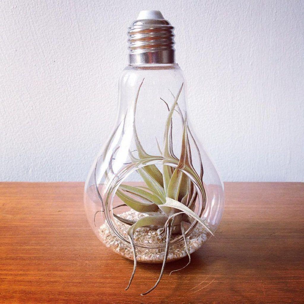 Pin by karri on stuff to buy pinterest light bulb bulbs and display