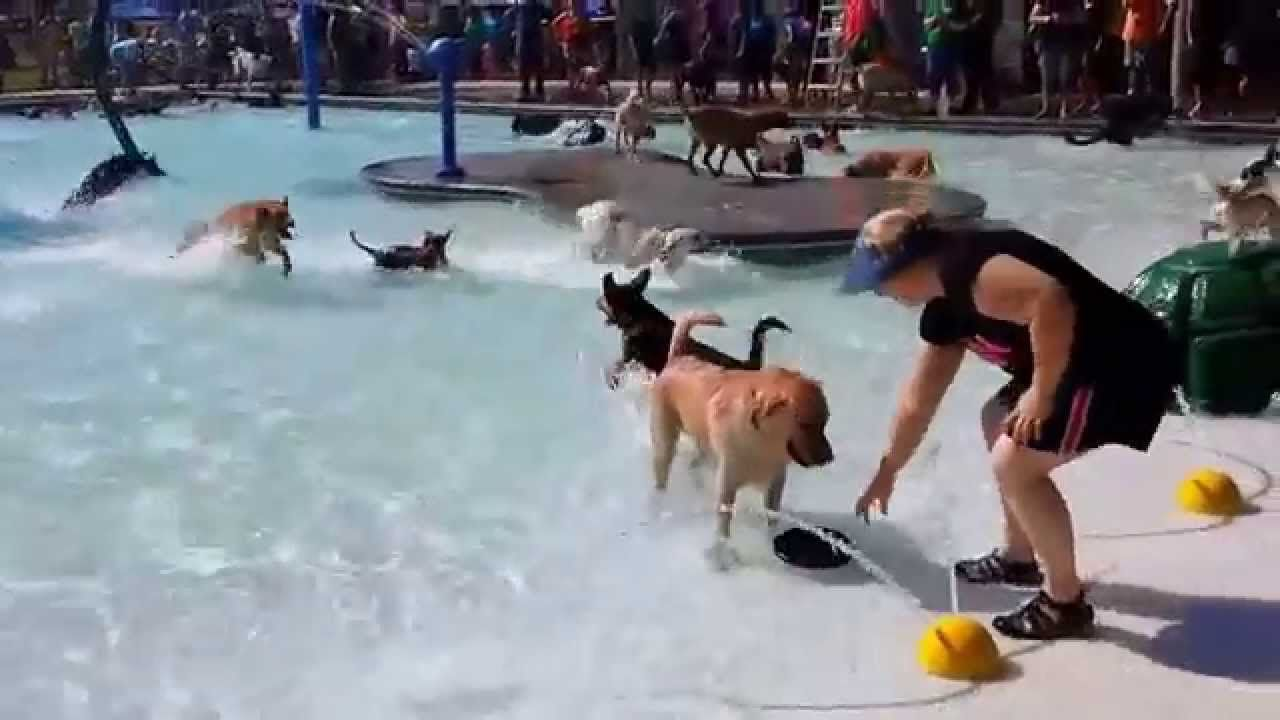 Public Pool in Idaho Throws A Party for Local Dogs Before Closing for the Season