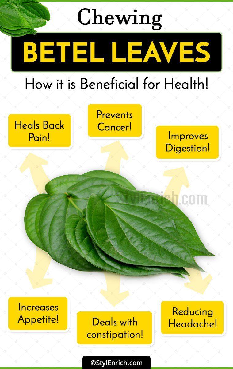 Betel Leaf Paan Benefits   Jidileaf co