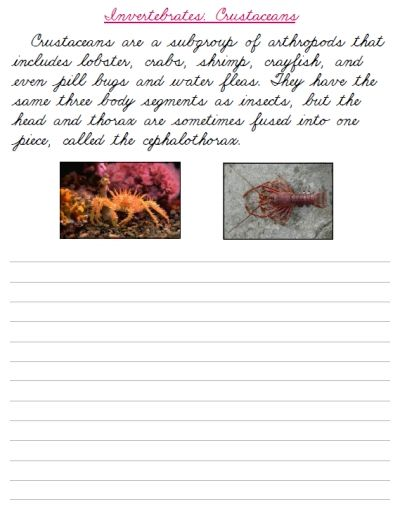 Free Printable Cursive Handwriting Worksheets Invertebrates