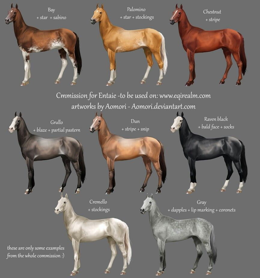 Color chart horse care equipment pinterest colour chart horse color chart nvjuhfo Choice Image