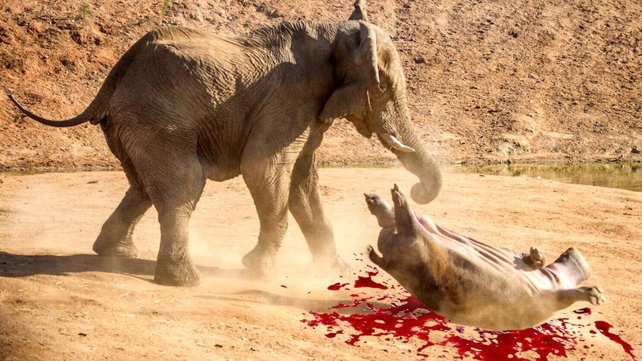 Fight Elephants Image | Free Download GameFree Download Game Lion Vs Elephant