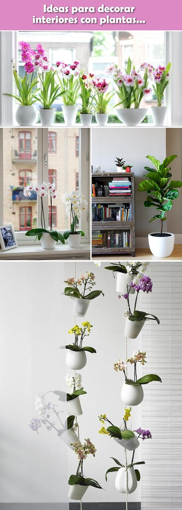 Ideas originales para decorar interiores con plantas for Decoracion de interiores ideas originales