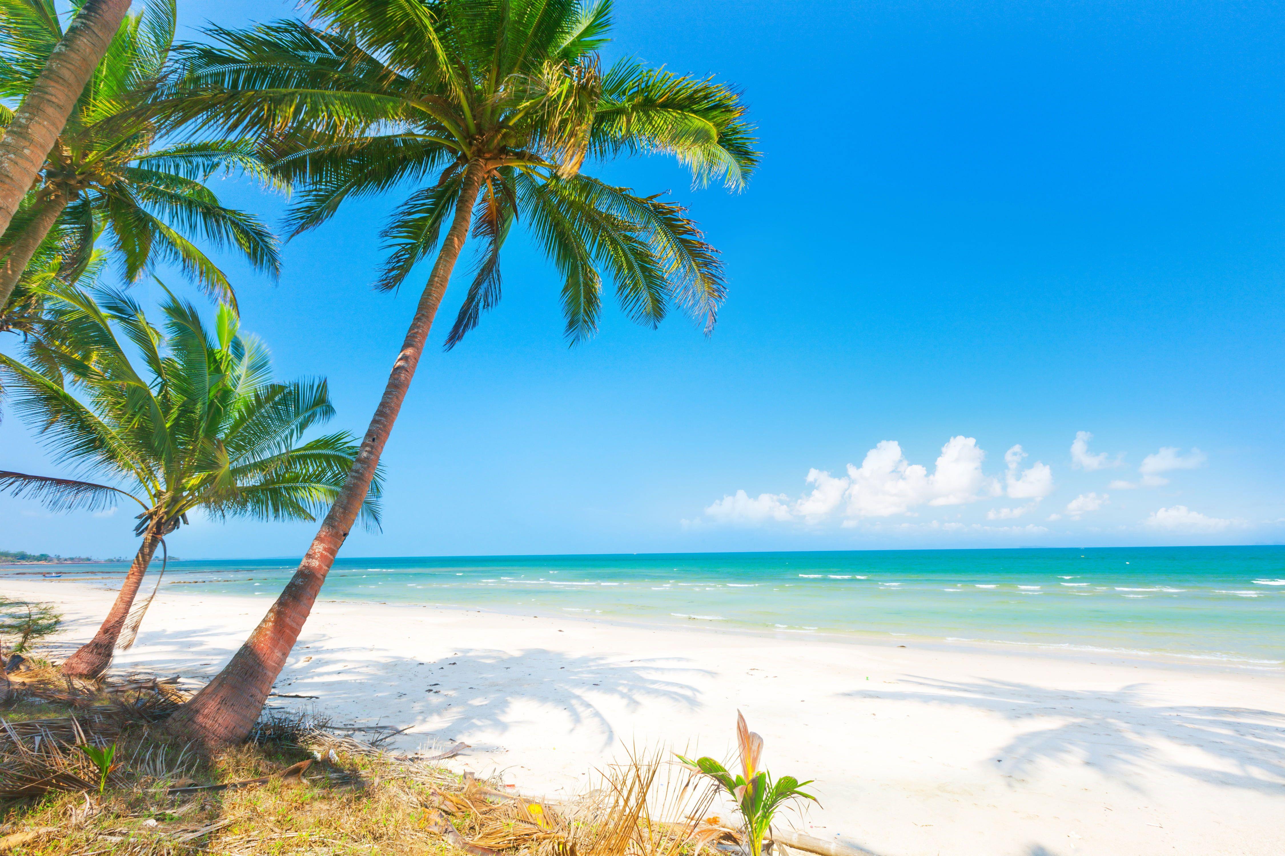 Wallpaper Palm Tree Sand Sea Beach The Sun Palm Trees In 2021 Palm Trees Wallpaper Palm Trees Beach Palm Trees Tropical island beach palm sea sand