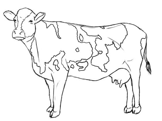 Dairy Cow Line Drawings To Make The Cow S Snout Draw A