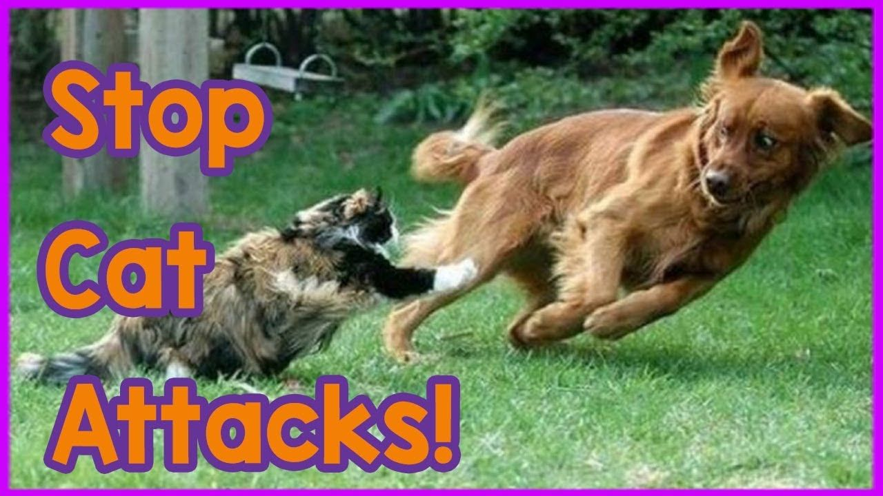 How to stop your cat attacking your dog tips on how to stop your