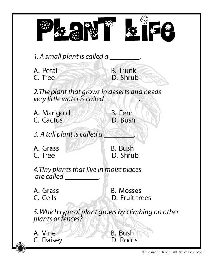Printable Worksheets science worksheets for class 5 : Plant Life for Kids Plant Life Worksheet – Classroom Jr. | The ...