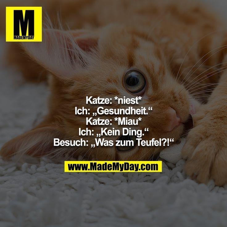 Katze: * niesen * - ich ...   - Fussball Lustiger -
