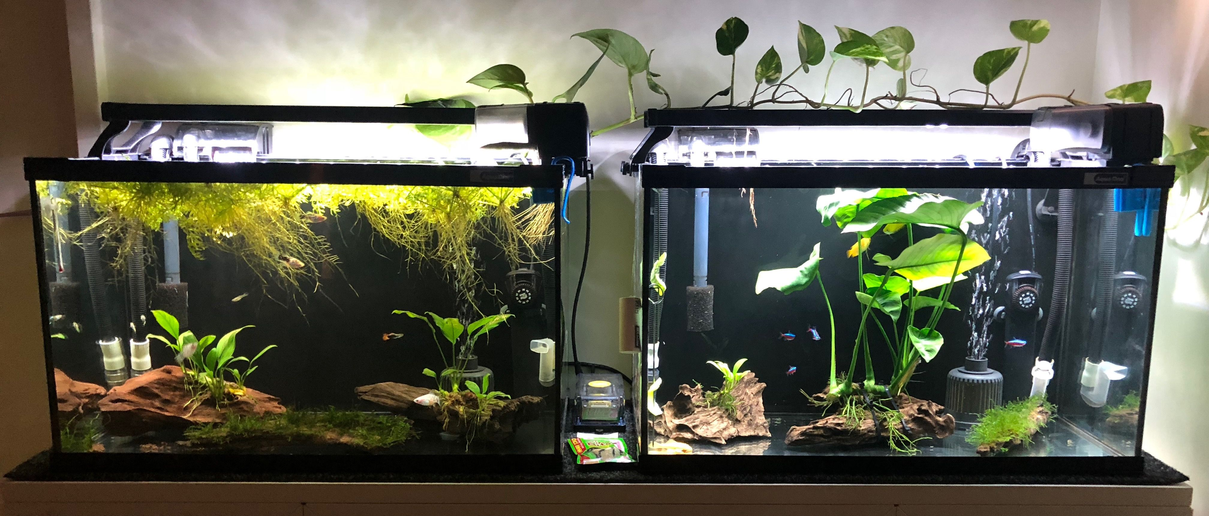 Pin by Trent R. on Aquariums and Aquascaping | Aquascape ...