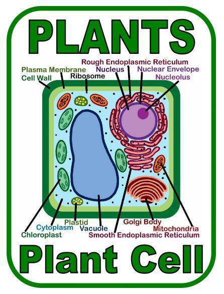 Worksheets Plant Cell Coloring Worksheet collection of plant cell coloring worksheet sharebrowse delibertad