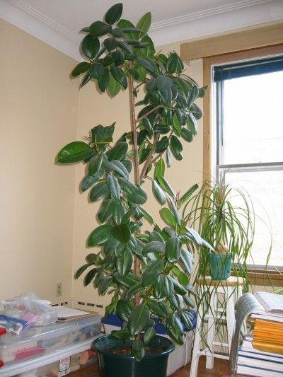 Jade Plant Ideas