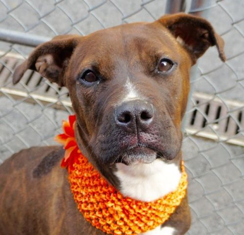 Bumba A1068857 Dog Help Best Puppies Dogs