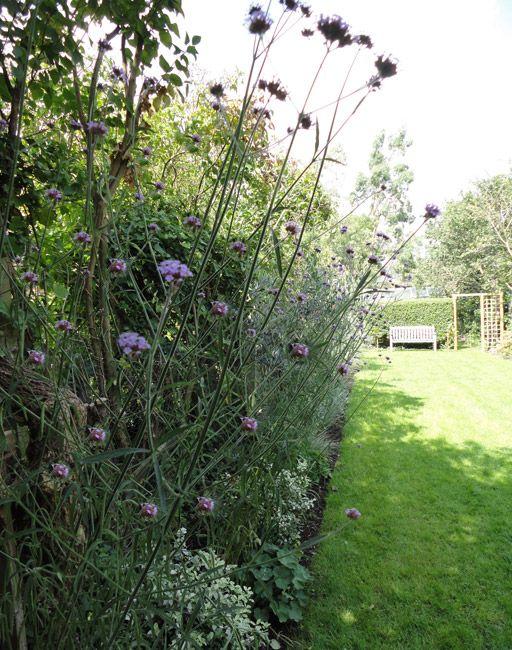 Grassy Garden - Garden design by Antonia Schofield