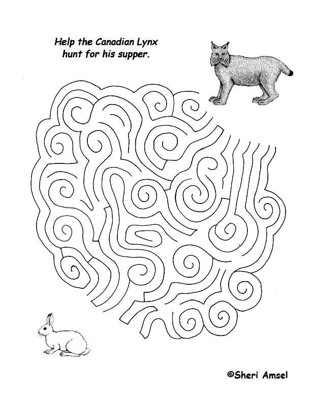Maze - What Does the Lynx Eat?